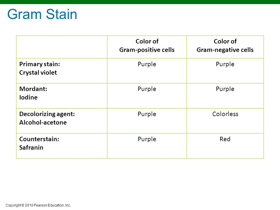 Gram Stain Color of Gram-positive cells Gram-negative cells