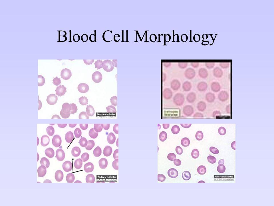 Blood Cell Morphology