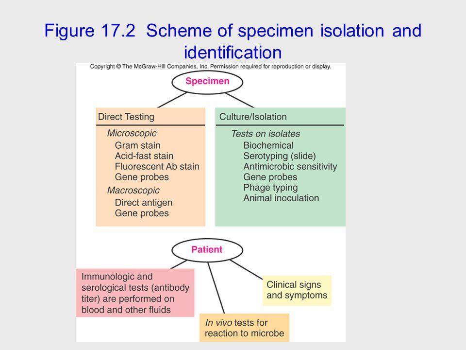 Figure 17.2 Scheme of specimen isolation and identification
