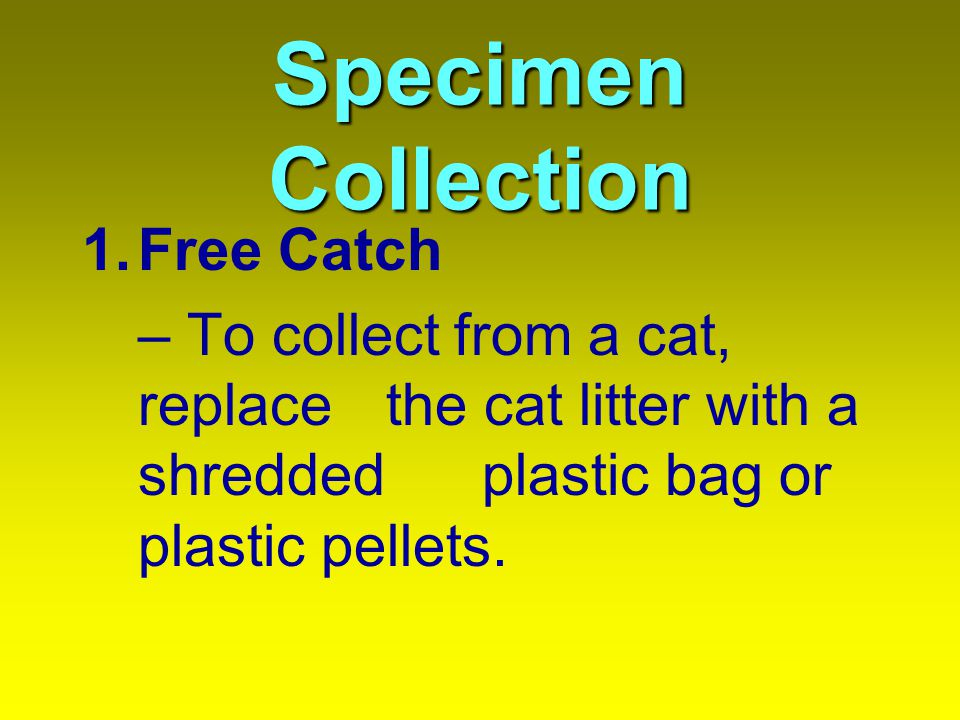 Specimen Collection Free Catch