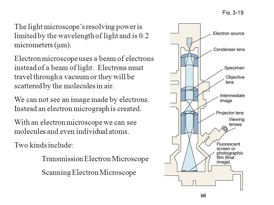 Transmission Electron Microscope Scanning Electron Microscope