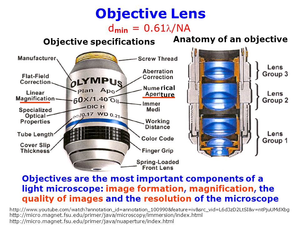 Objective Lens dmin = 0.61l/NA Anatomy of an objective