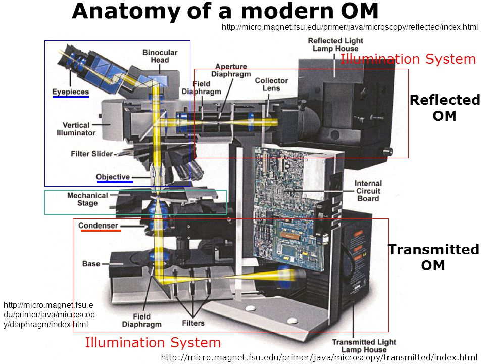 Anatomy of a modern OM Illumination System Reflected OM Transmitted OM