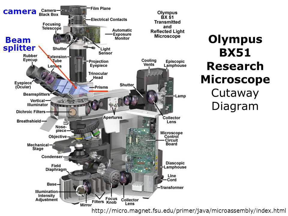 Olympus BX51 Research Microscope Cutaway Diagram
