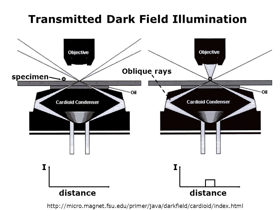 Transmitted Dark Field Illumination