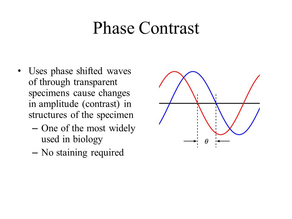 Phase Contrast Uses phase shifted waves of through transparent specimens cause changes in amplitude (contrast) in structures of the specimen.