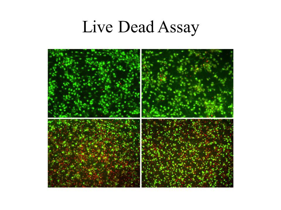 Live Dead Assay