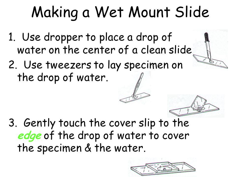 Making a Wet Mount Slide