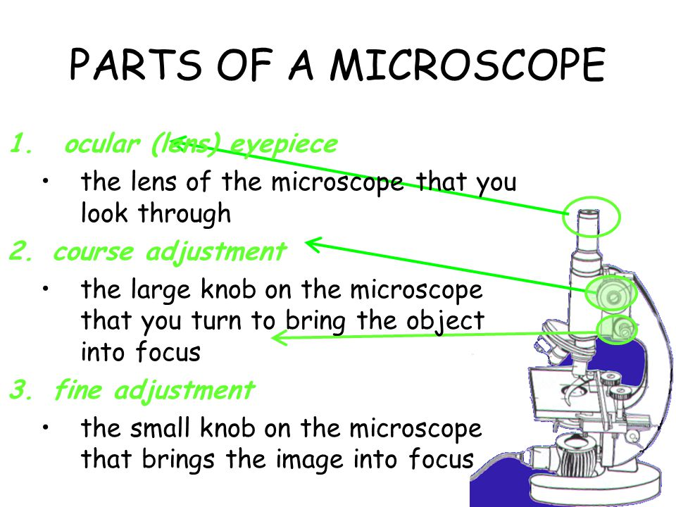 PARTS OF A MICROSCOPE ocular (lens) eyepiece