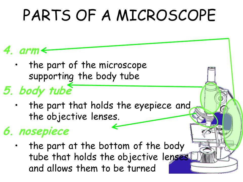 PARTS OF A MICROSCOPE arm body tube nosepiece