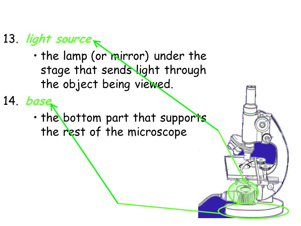 13. light source the lamp (or mirror) under the stage that sends light through the object being viewed.