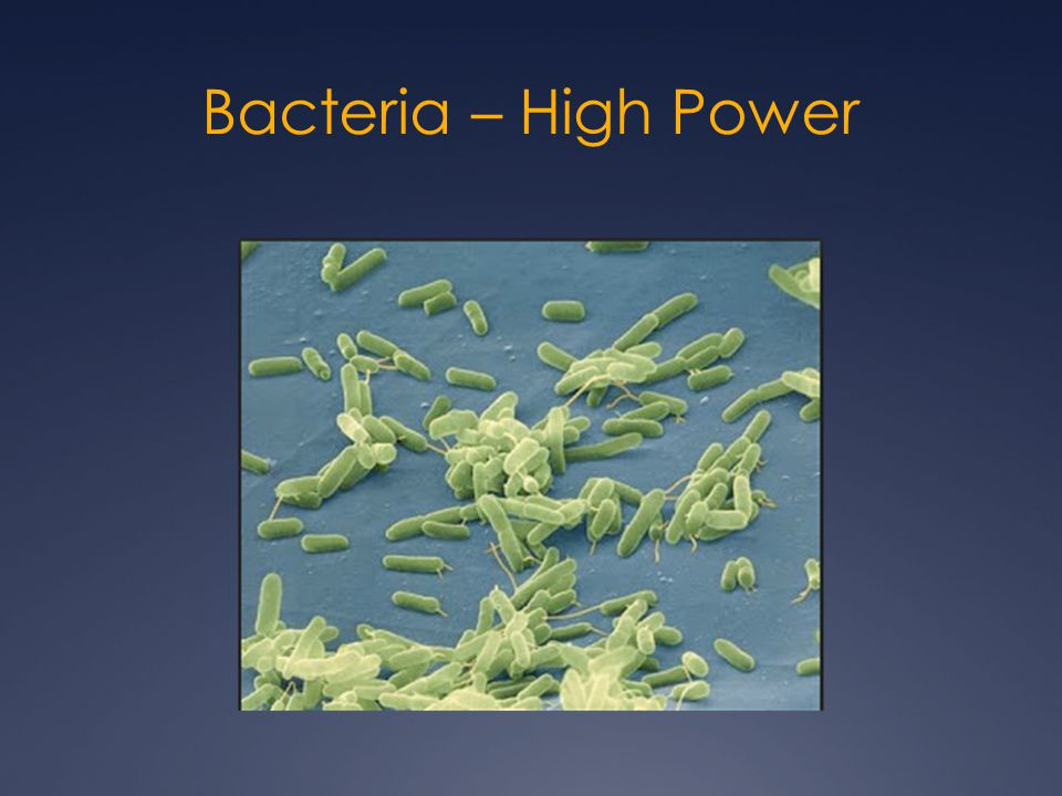 Bacteria – High Power