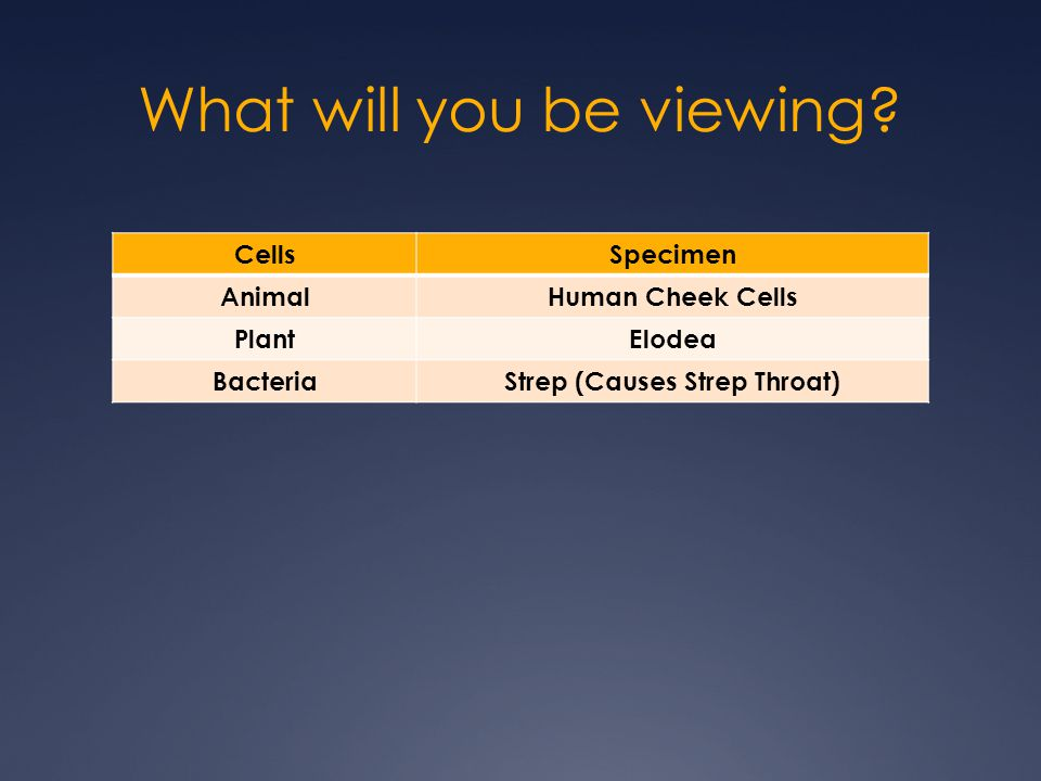What will you be viewing