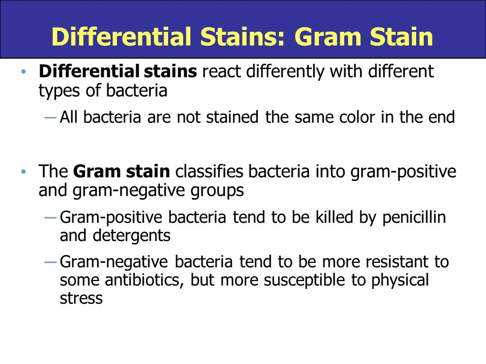 Differential Stains: Gram Stain