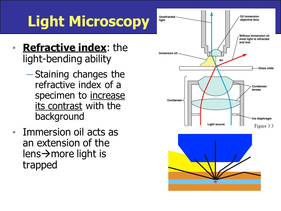 Light Microscopy Refractive index: the light-bending ability