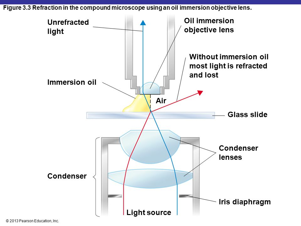Oil immersion objective lens