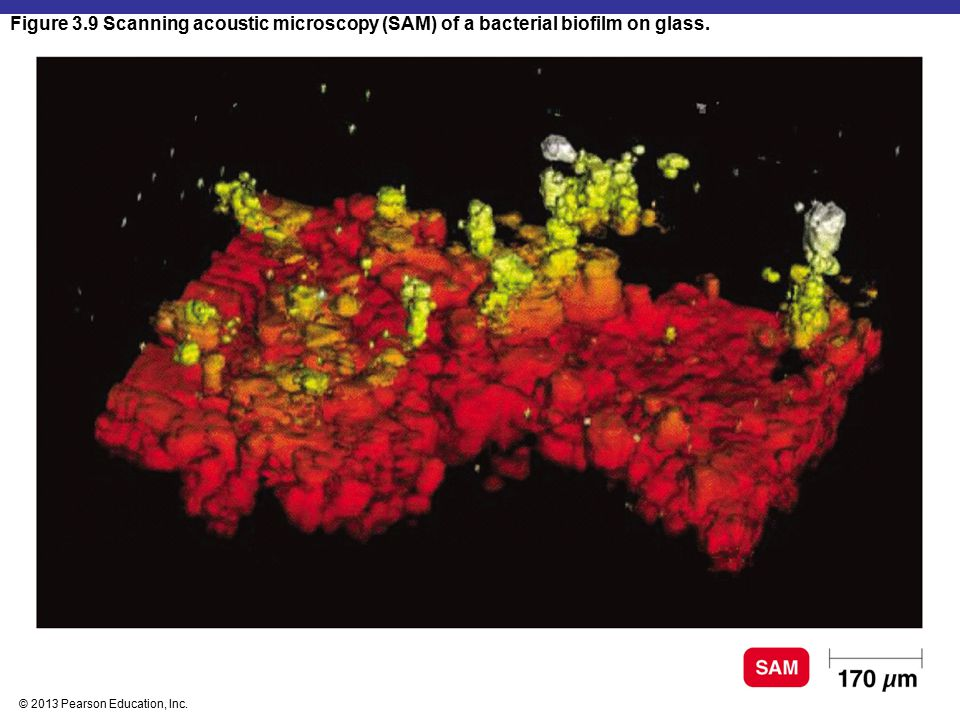 Figure 3.9 Scanning acoustic microscopy (SAM) of a bacterial biofilm on glass.