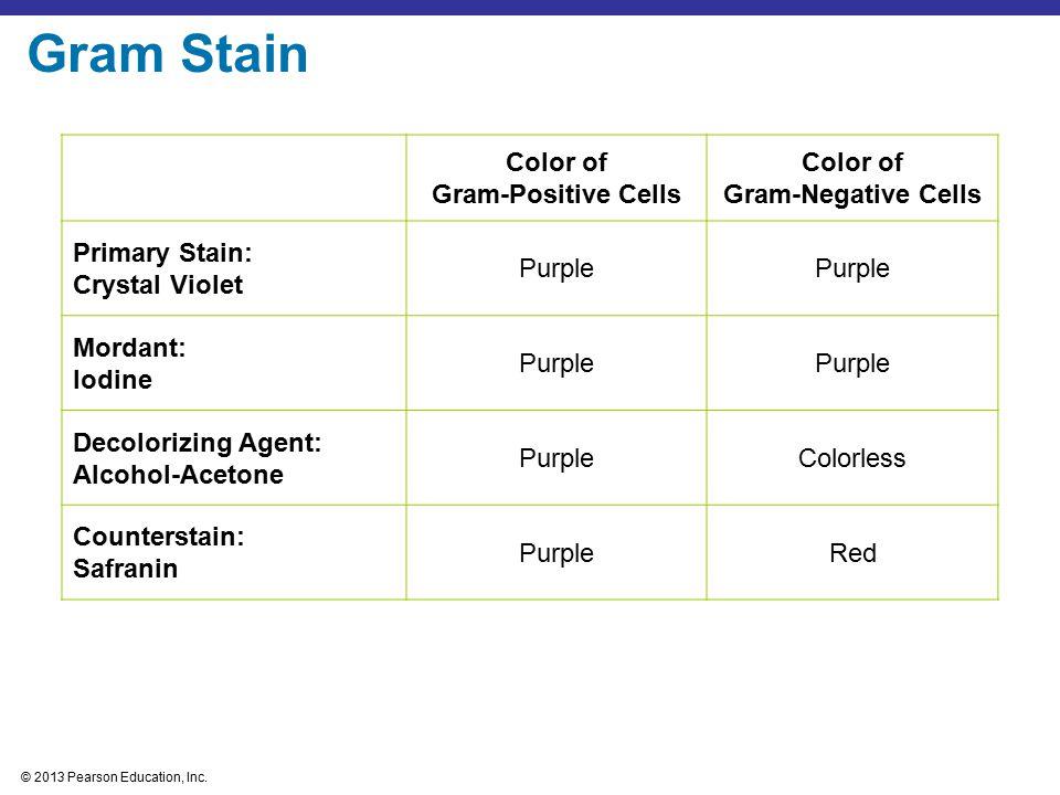 Gram Stain Color of Gram-Positive Cells Gram-Negative Cells