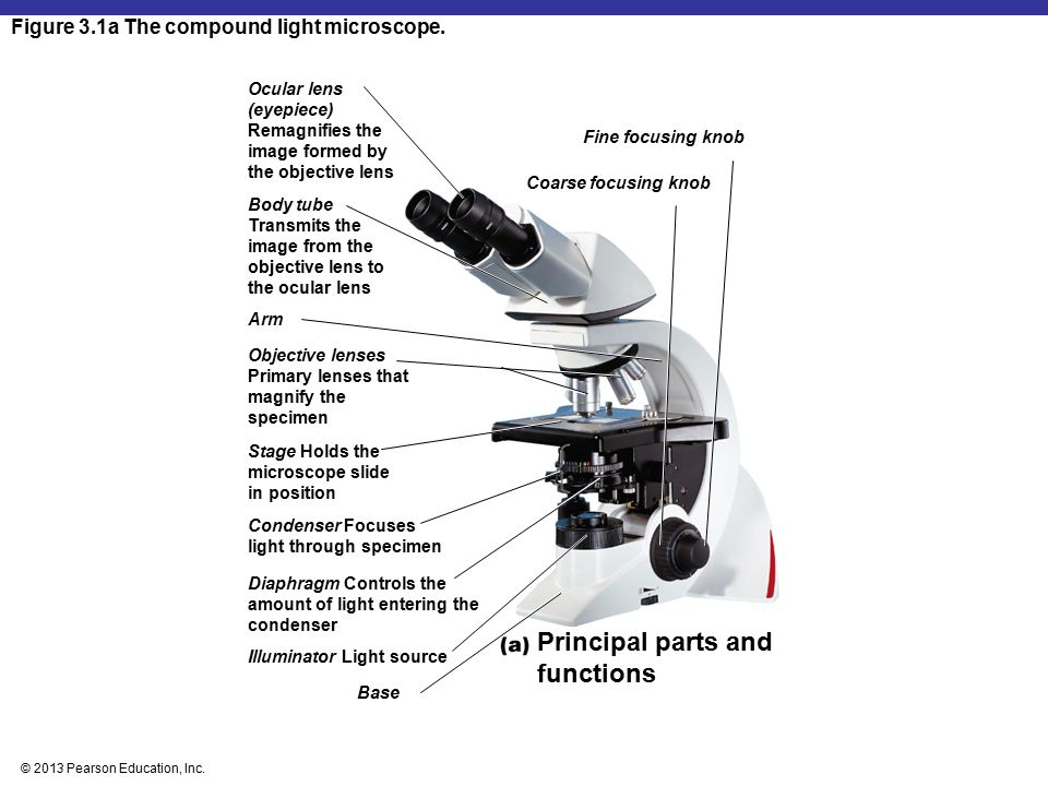 Principal parts and functions