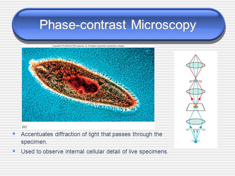 Phase-contrast Microscopy