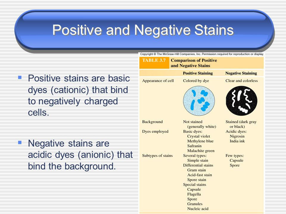 Positive and Negative Stains