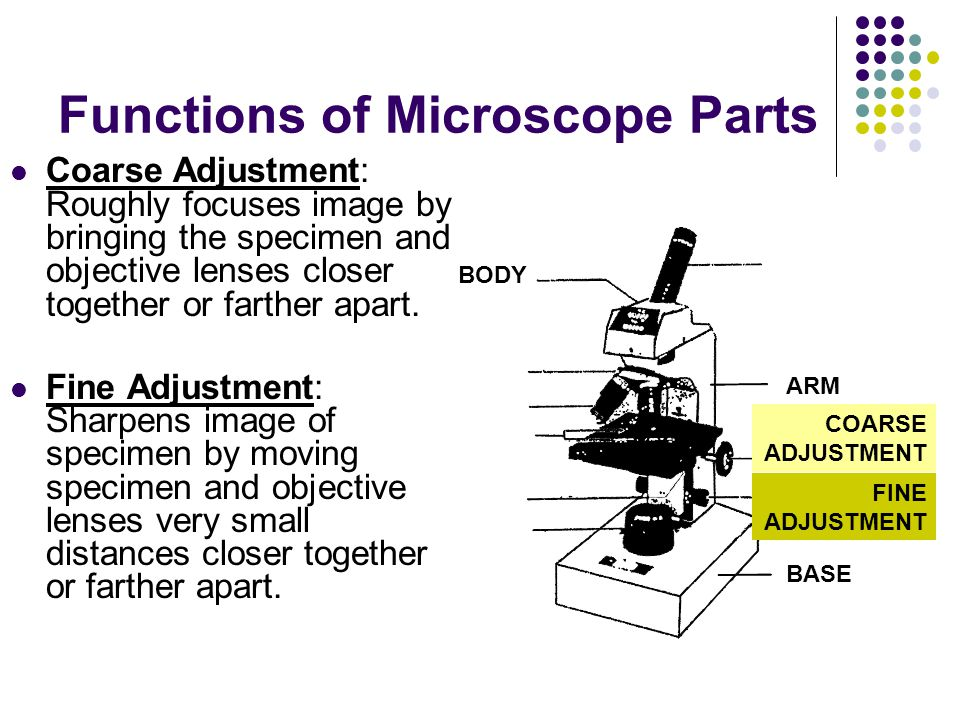 Functions of Microscope Parts