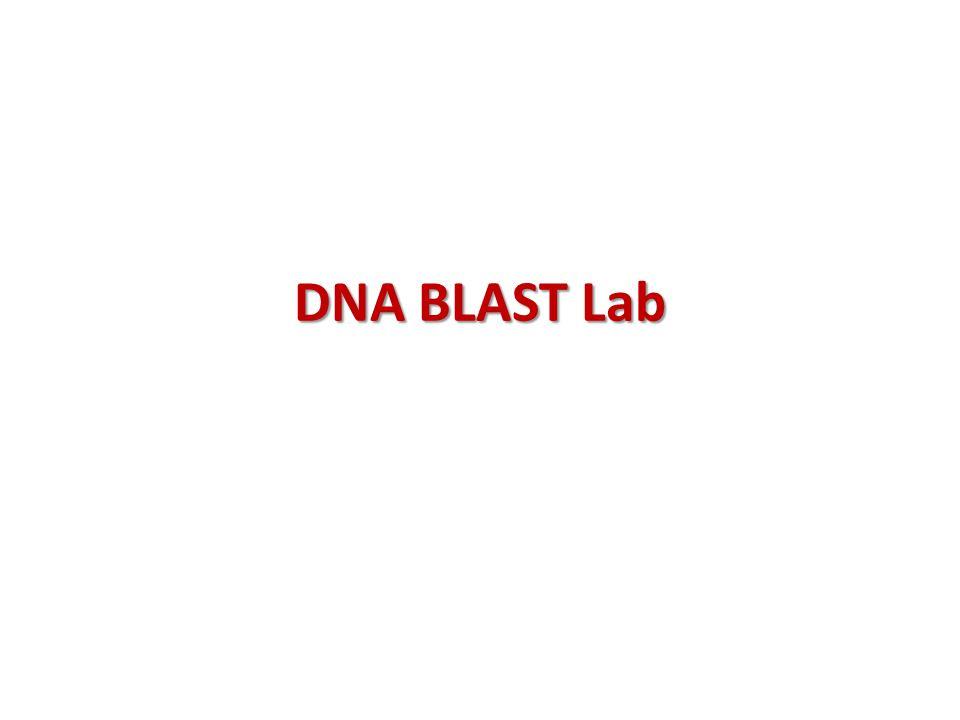 DNA BLAST Lab
