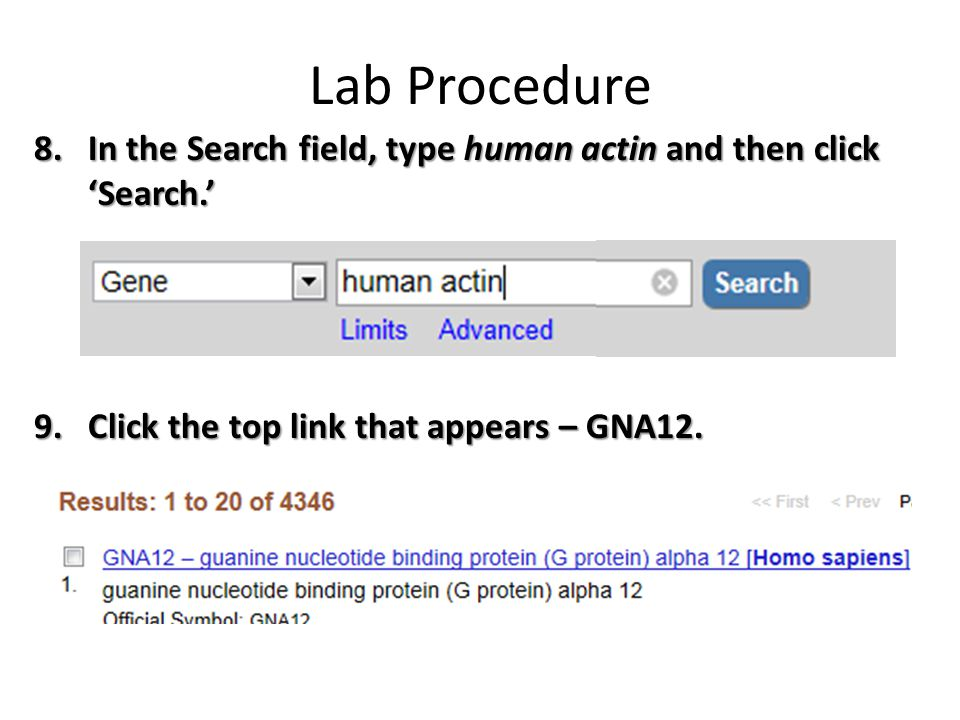 Lab Procedure In the Search field, type human actin and then click 'Search.' Click the top link that appears – GNA12.