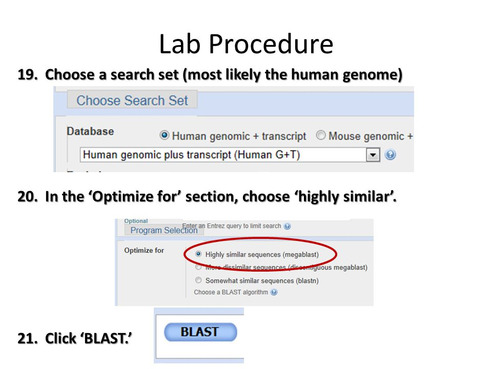 Lab Procedure Choose a search set (most likely the human genome)