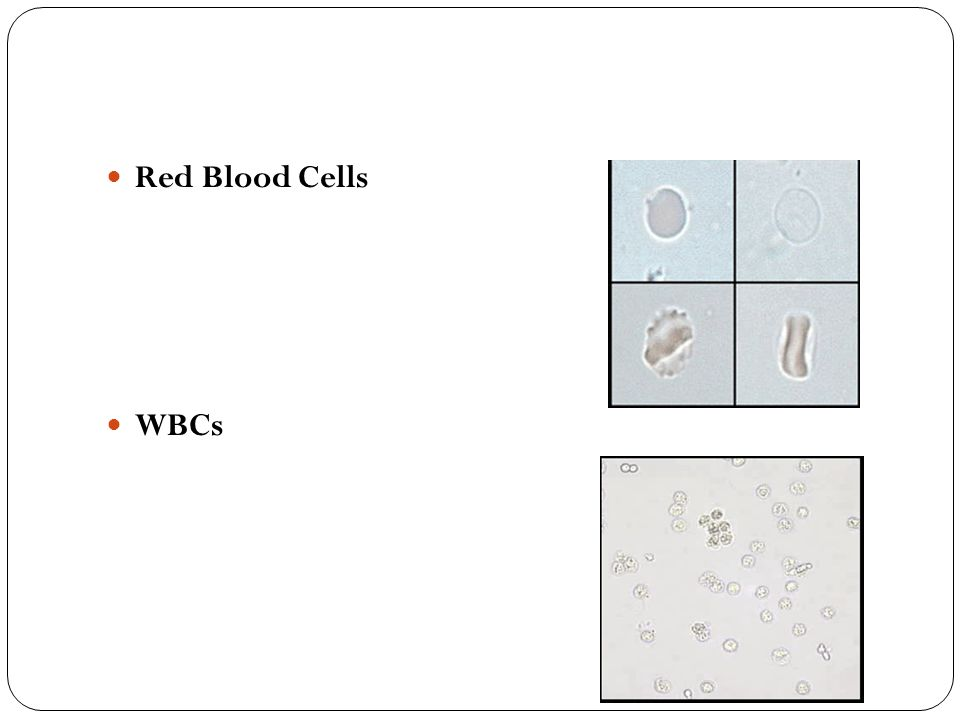 Red Blood Cells WBCs