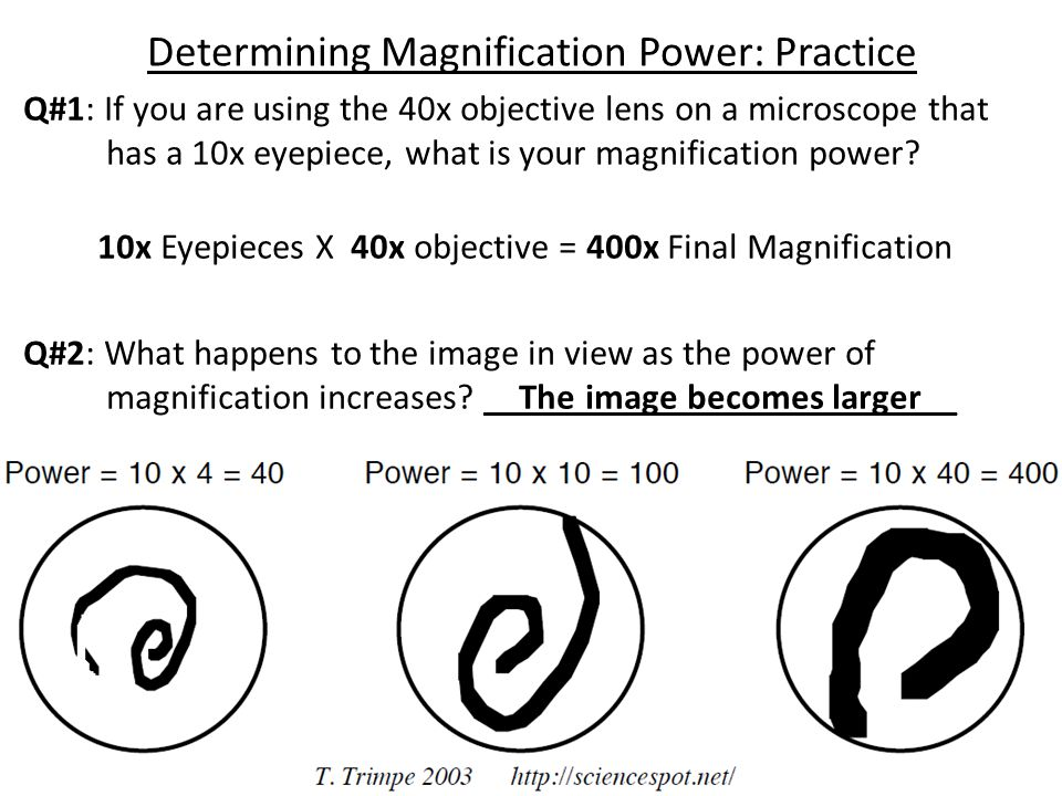 Determining Magnification Power: Practice