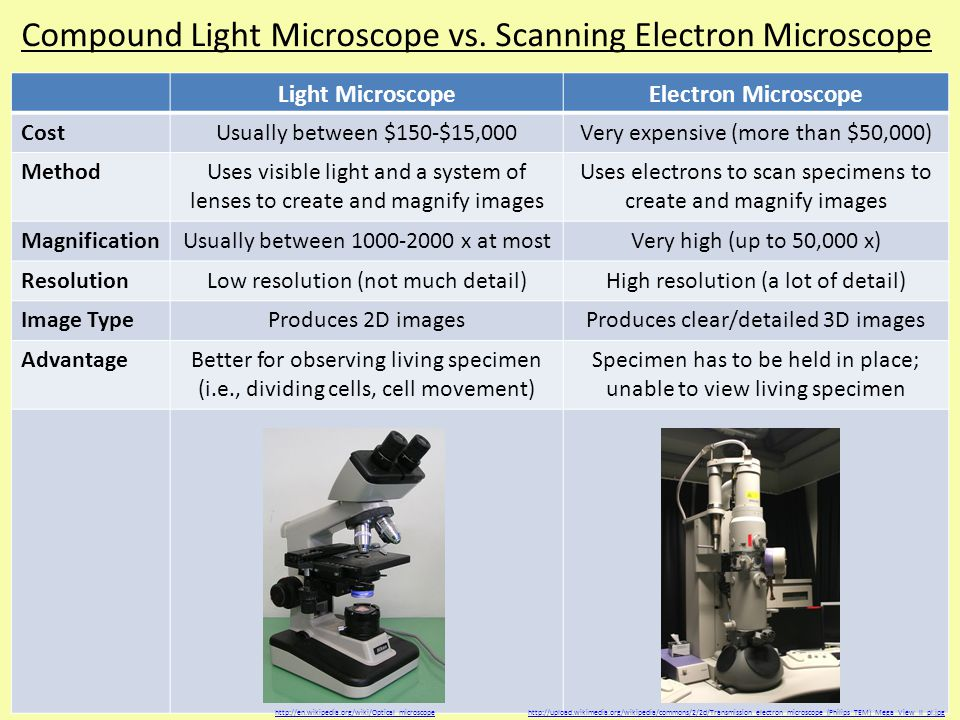 The Comparison of a Light Microscope to an Electron Microscope
