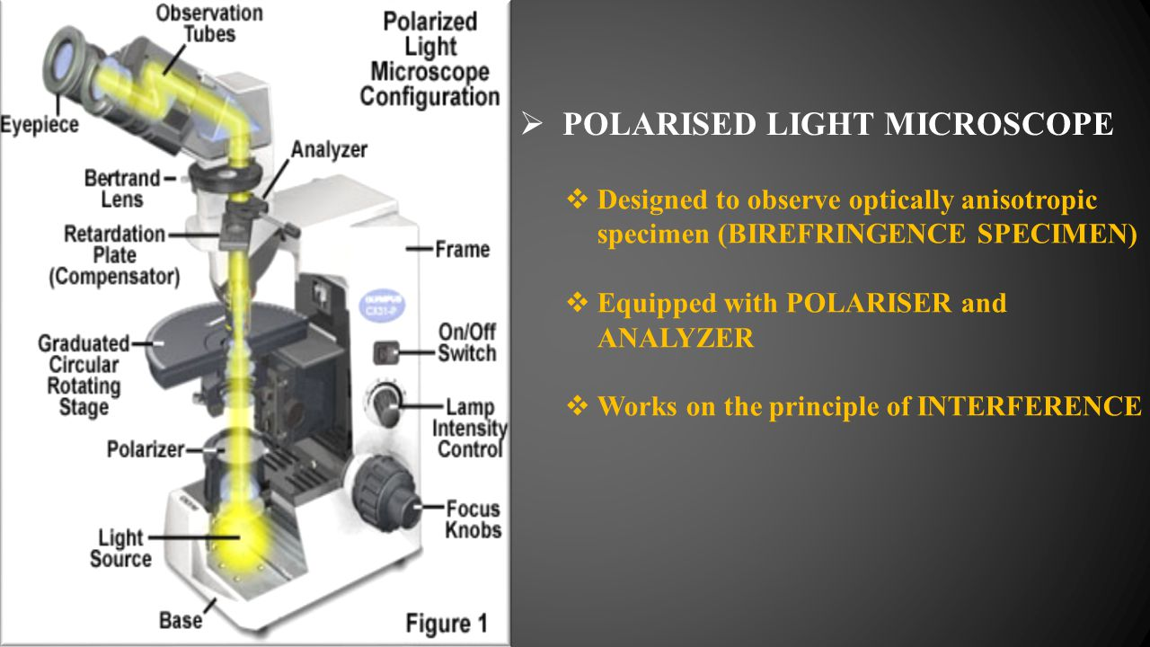 POLARISED LIGHT MICROSCOPE