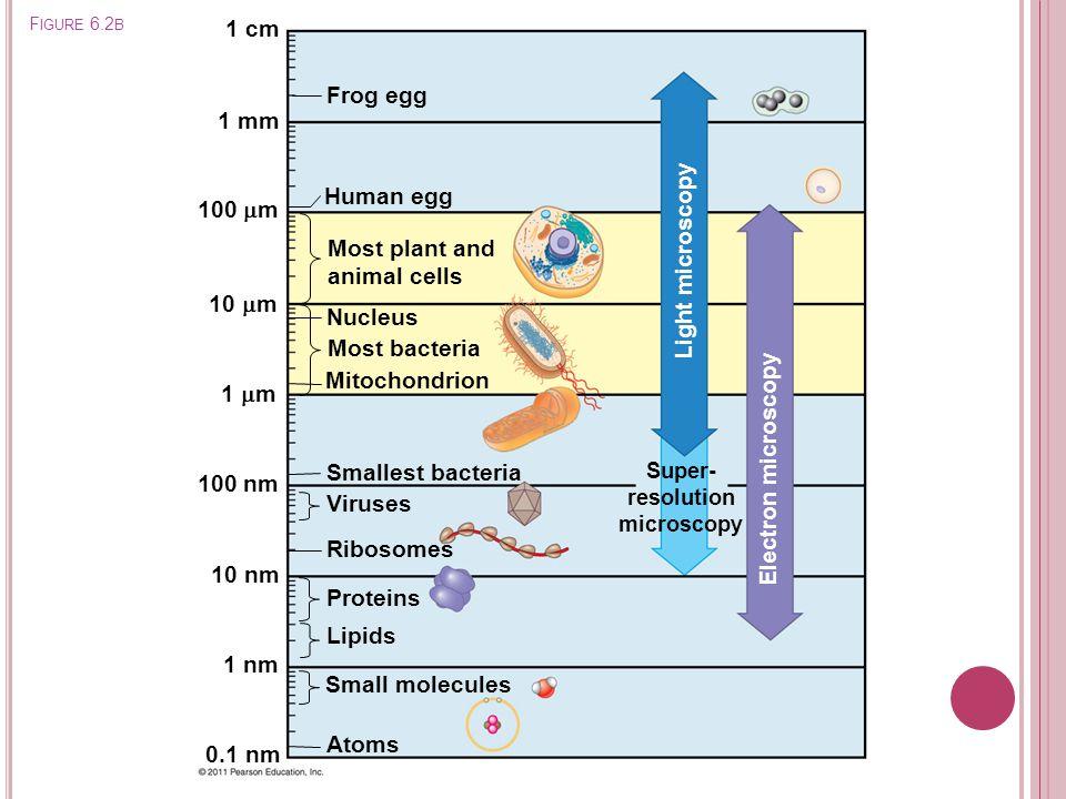Super- resolution microscopy