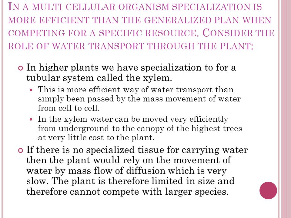 In a multi cellular organism specialization is more efficient than the generalized plan when competing for a specific resource. Consider the role of water transport through the plant: