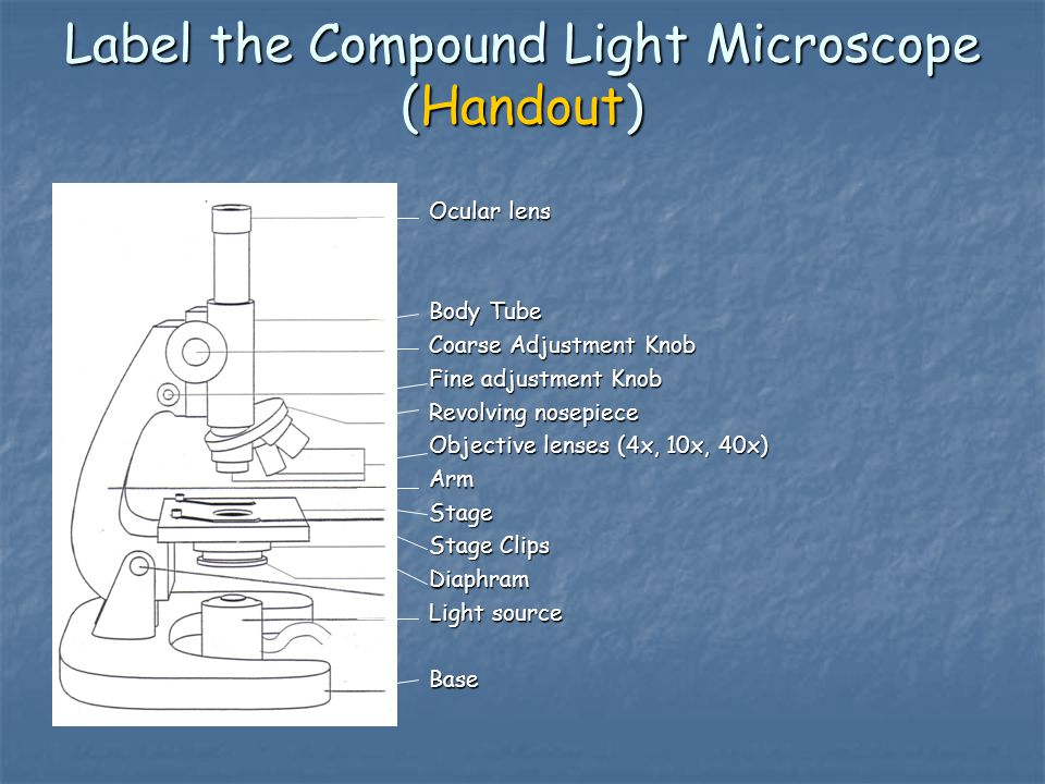 Label the Compound Light Microscope (Handout)