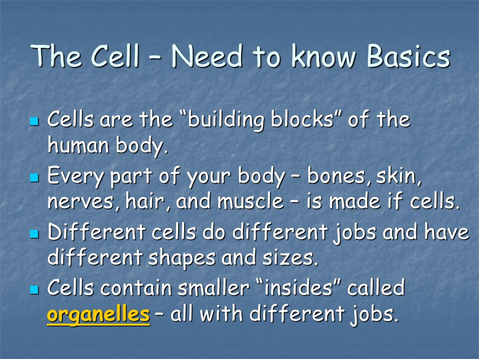 The Cell – Need to know Basics