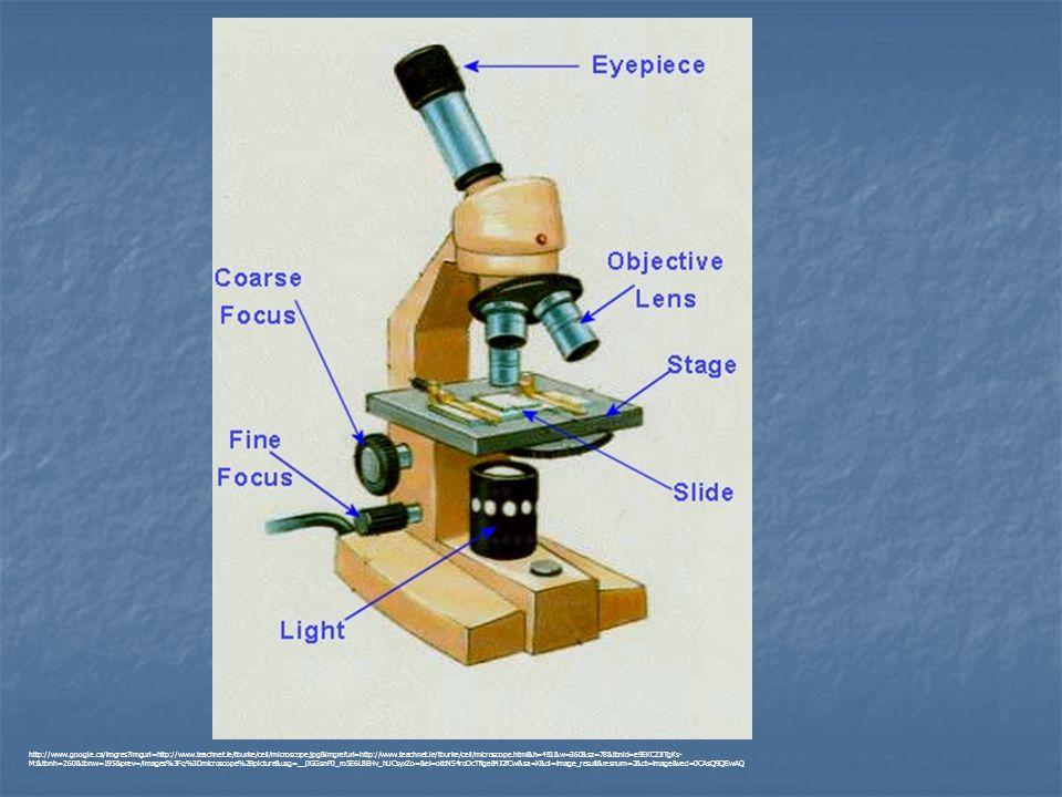 http://www. google. ca/imgres. imgurl=http://www. teachnet