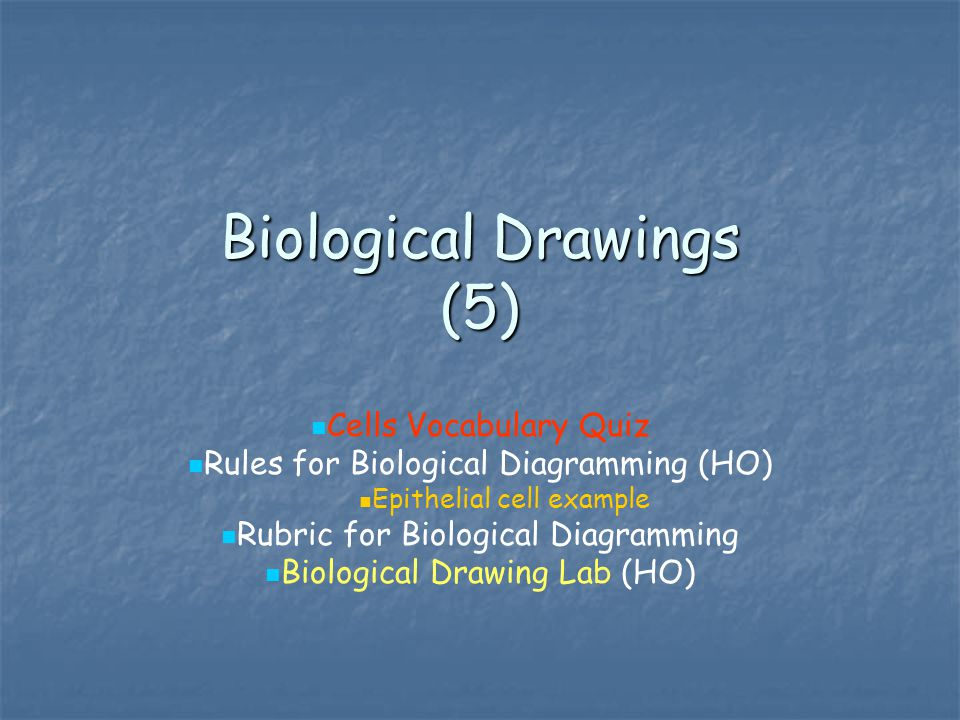 Biological Drawings (5)