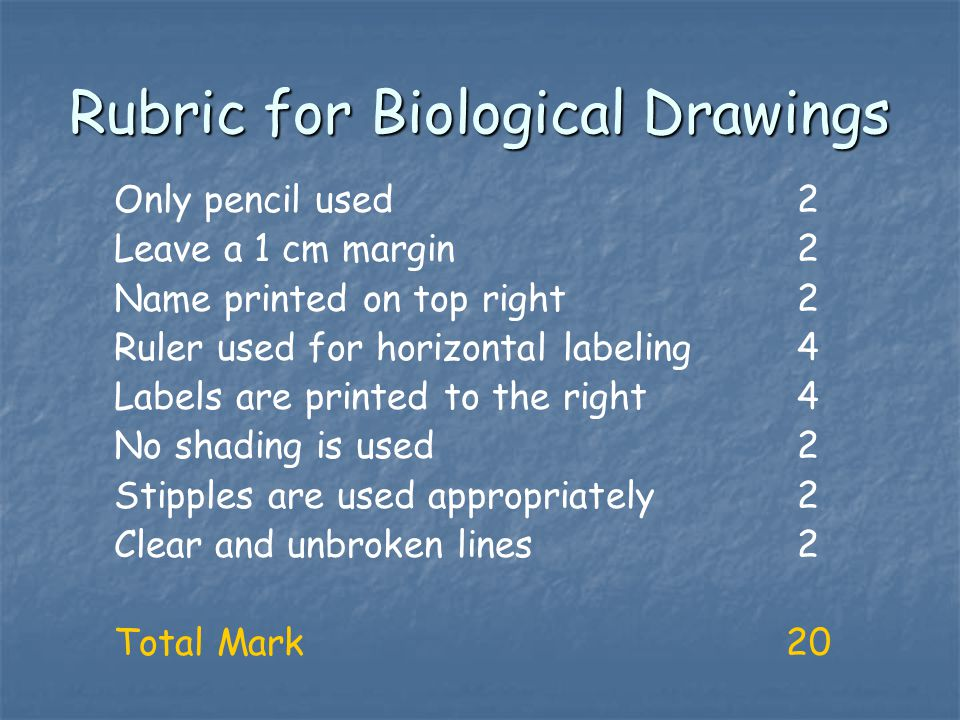 Rubric for Biological Drawings