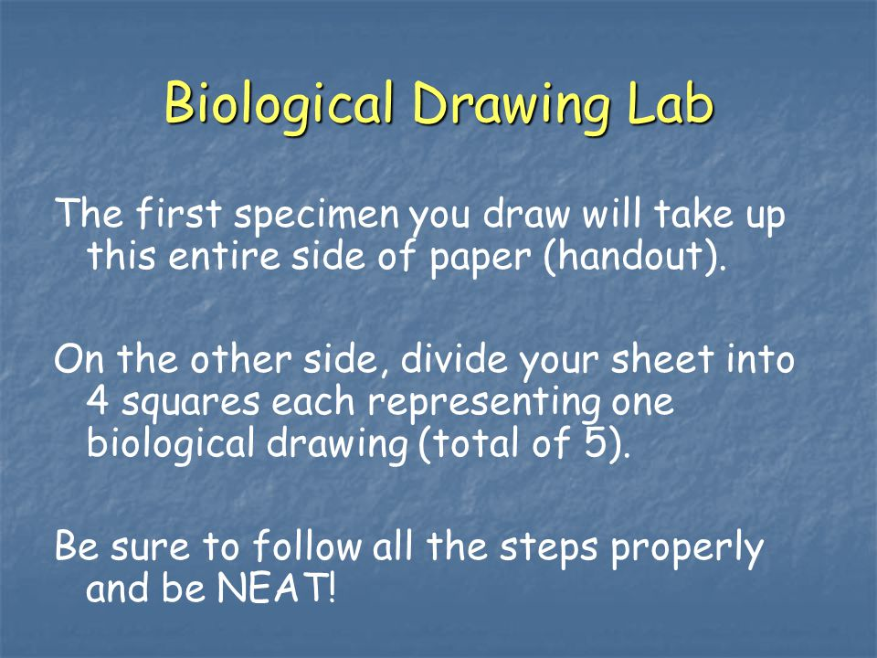 Biological Drawing Lab