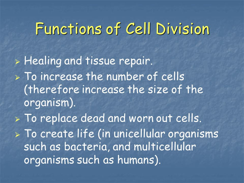 Functions of Cell Division