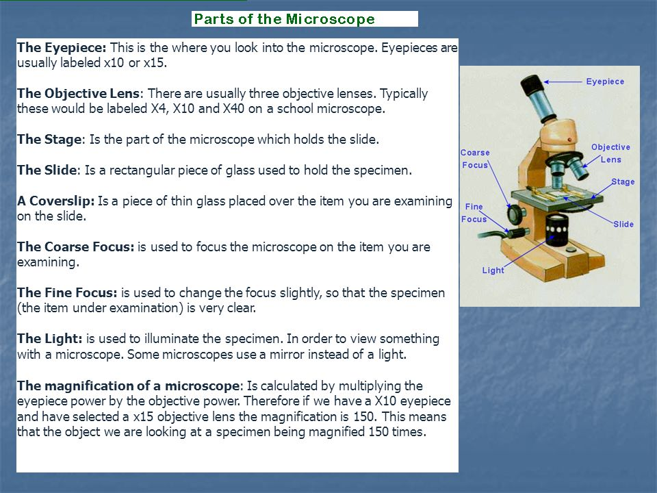The Eyepiece: This is the where you look into the microscope