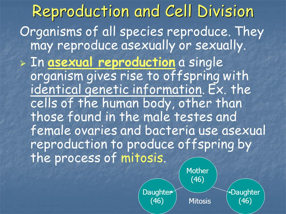 Reproduction and Cell Division