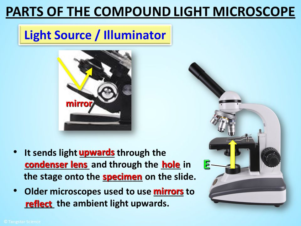 Light Source / Illuminator