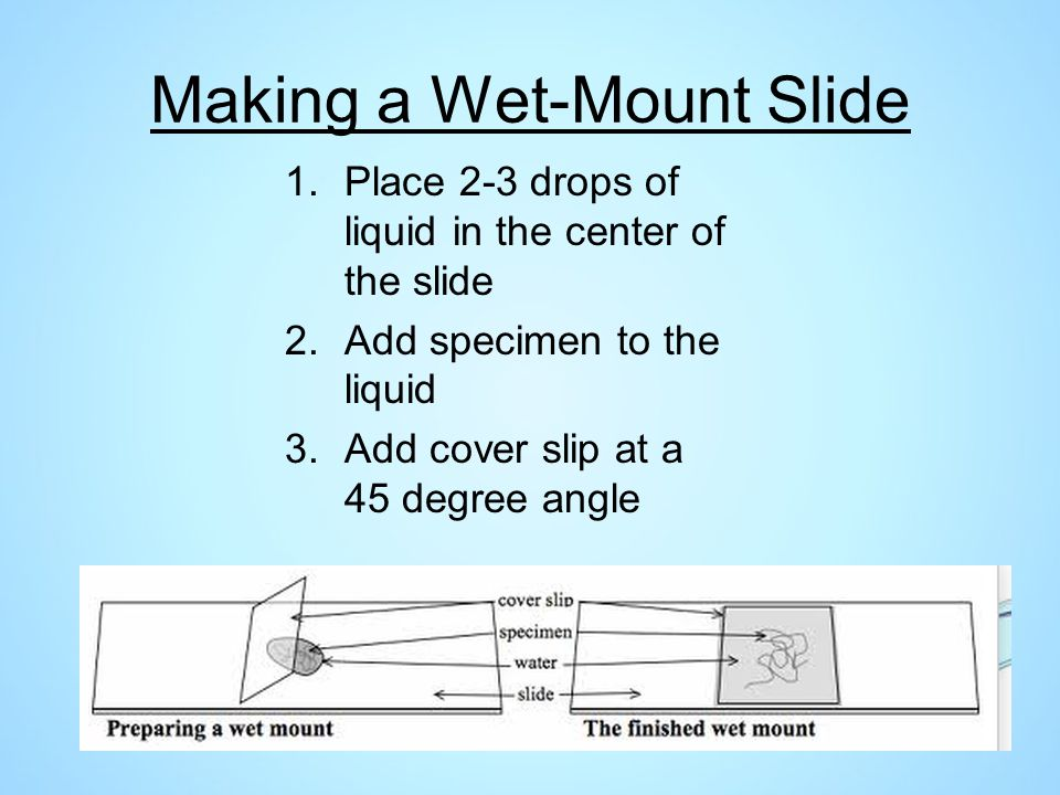 Making a Wet-Mount Slide