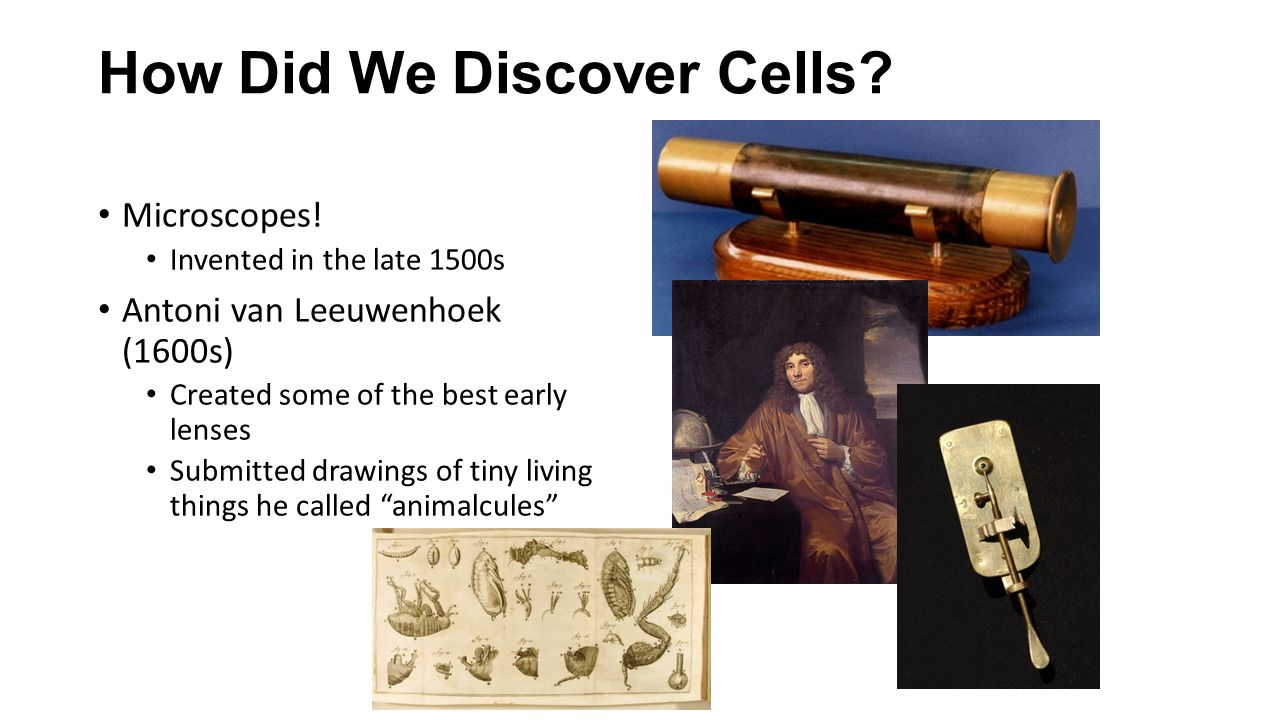 How Did We Discover Cells