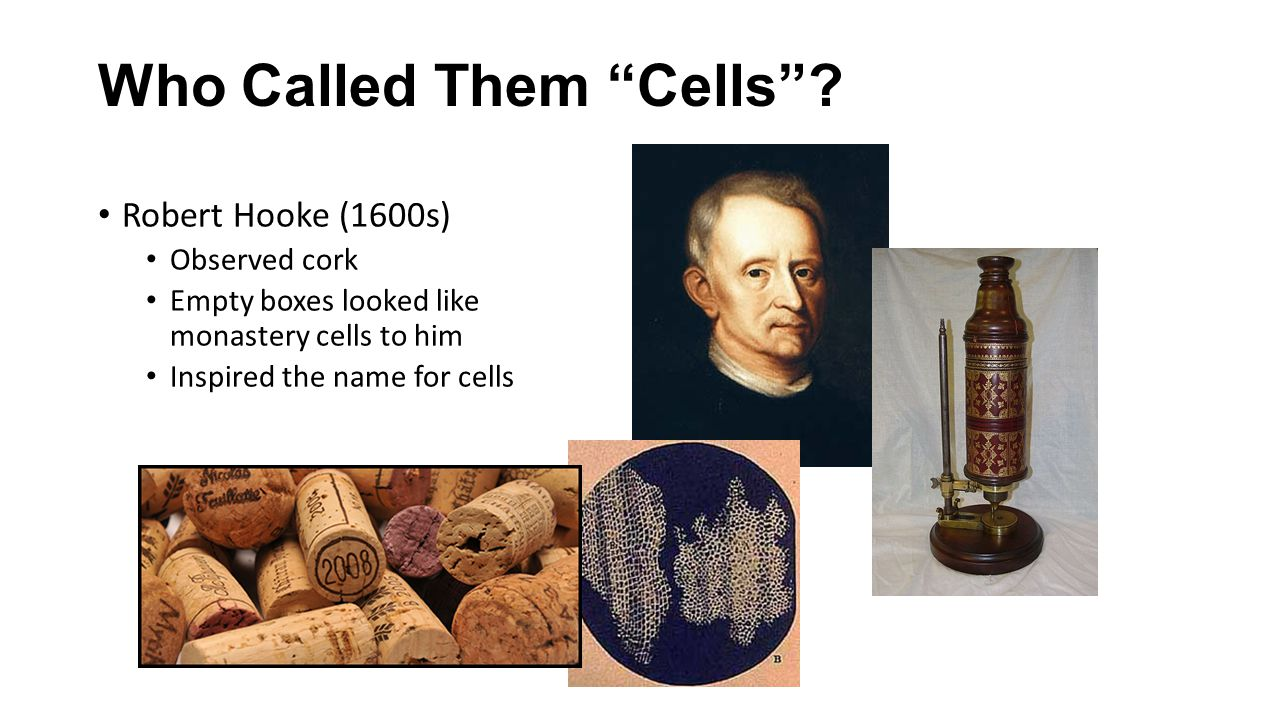 Who Called Them Cells
