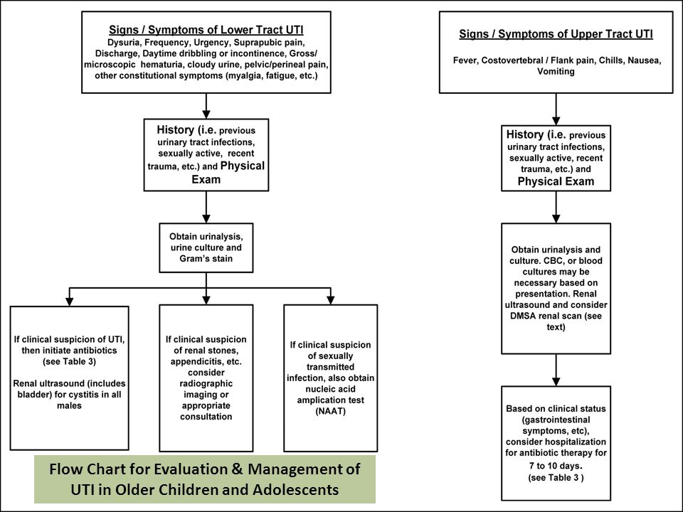 Flow Chart for Evaluation & Management of UTI in Older Children and Adolescents