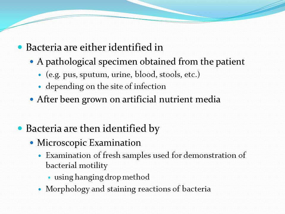 Bacteria are either identified in